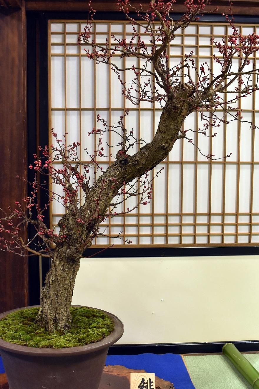 盆梅と盆石展 2018 (5)