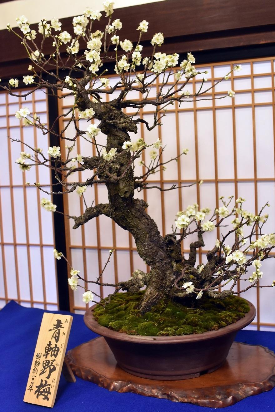盆梅と盆石展 2018 (8)