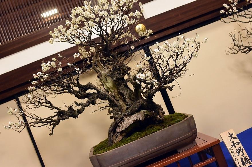 盆梅と盆石展 2018 (9)