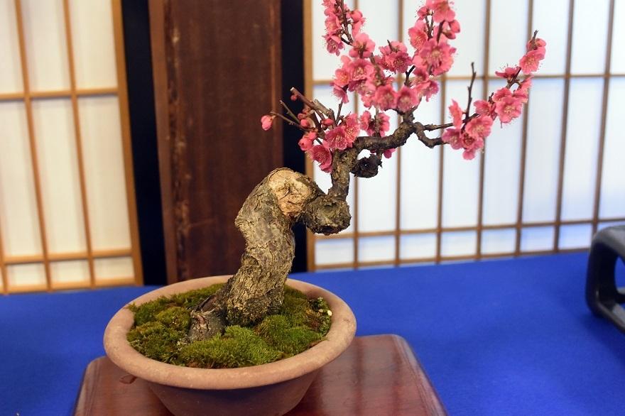 盆梅と盆石展 2018 (14)