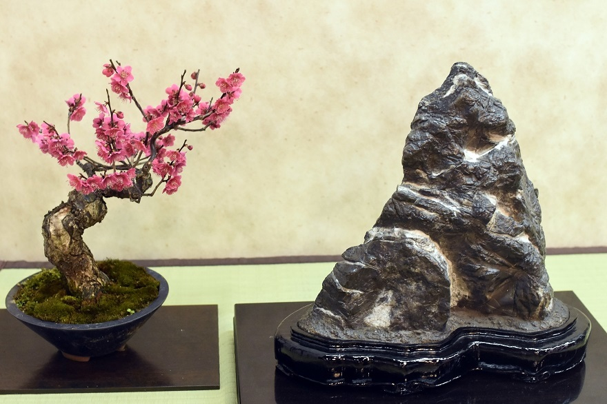 盆梅と盆石展 2018 (18)