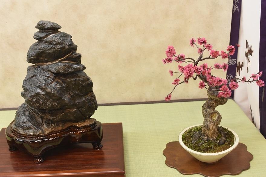 盆梅と盆石展 2018 (019)