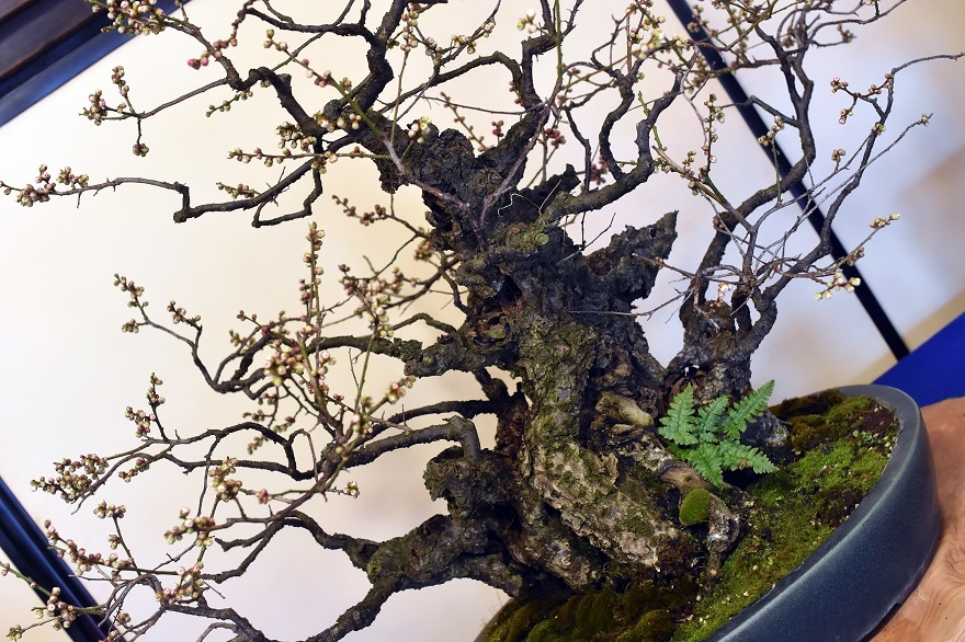 盆梅と盆石展 2018 (19)