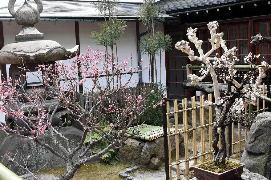 盆梅と盆石展 2018 (21)