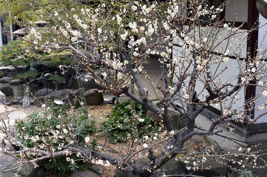 盆梅と盆石展 2018 (22)