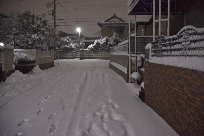 019 雪