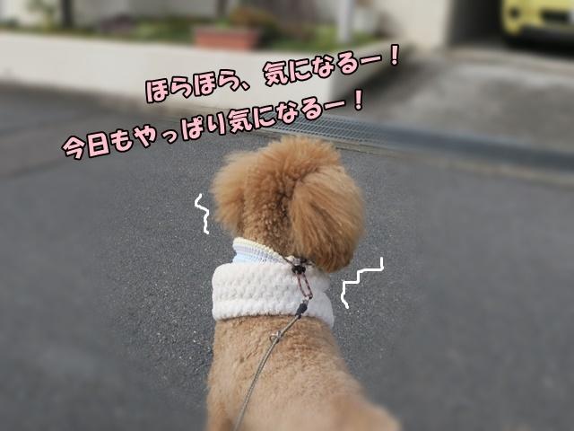 IMG_718920180202b.jpg