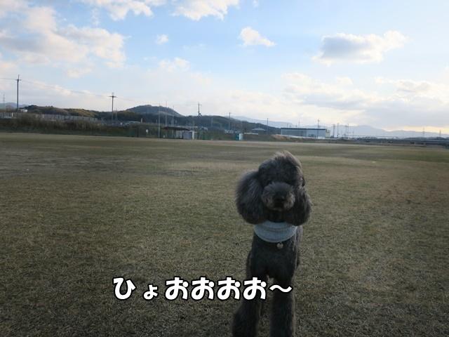 IMG_728620180204.jpg