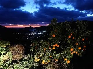 6蜜柑と夕焼け01