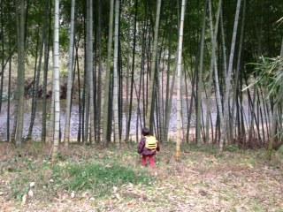 昭和の森竹藪