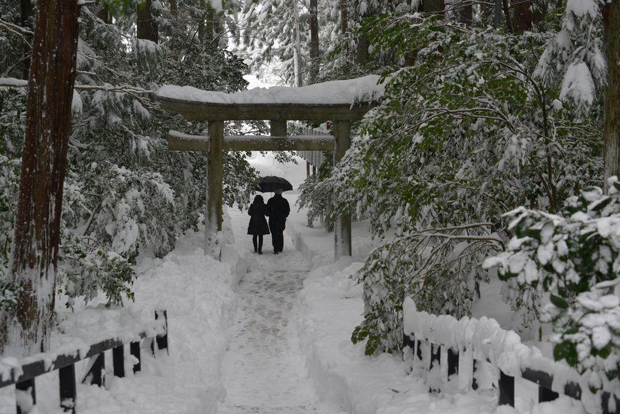 雪の弥彦神社-2
