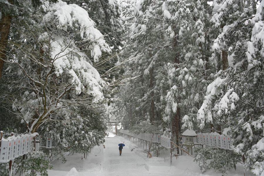 雪の弥彦神社-3