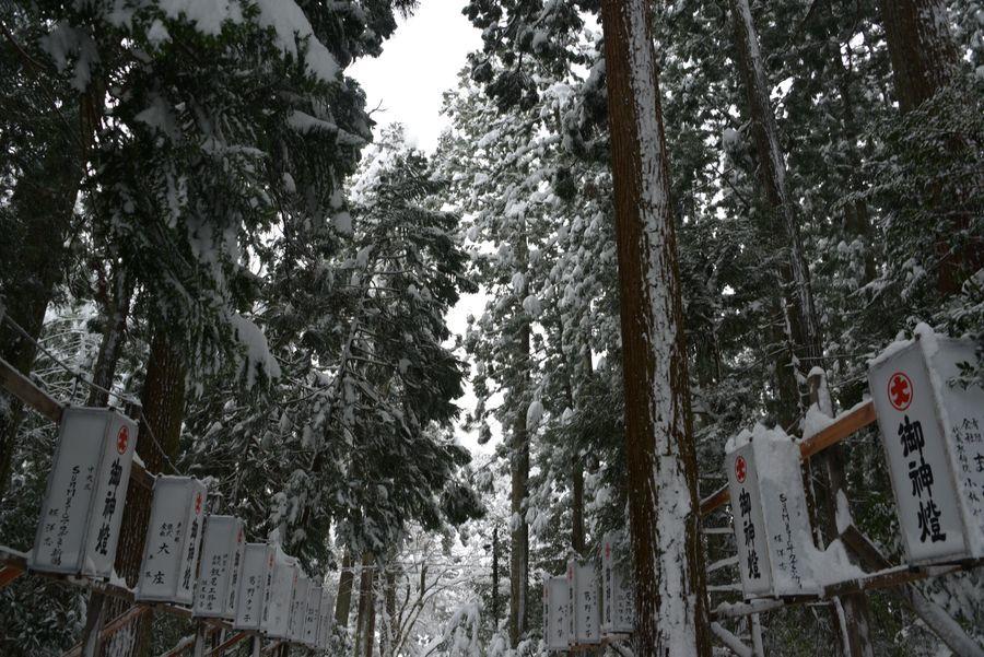 雪の弥彦神社-7