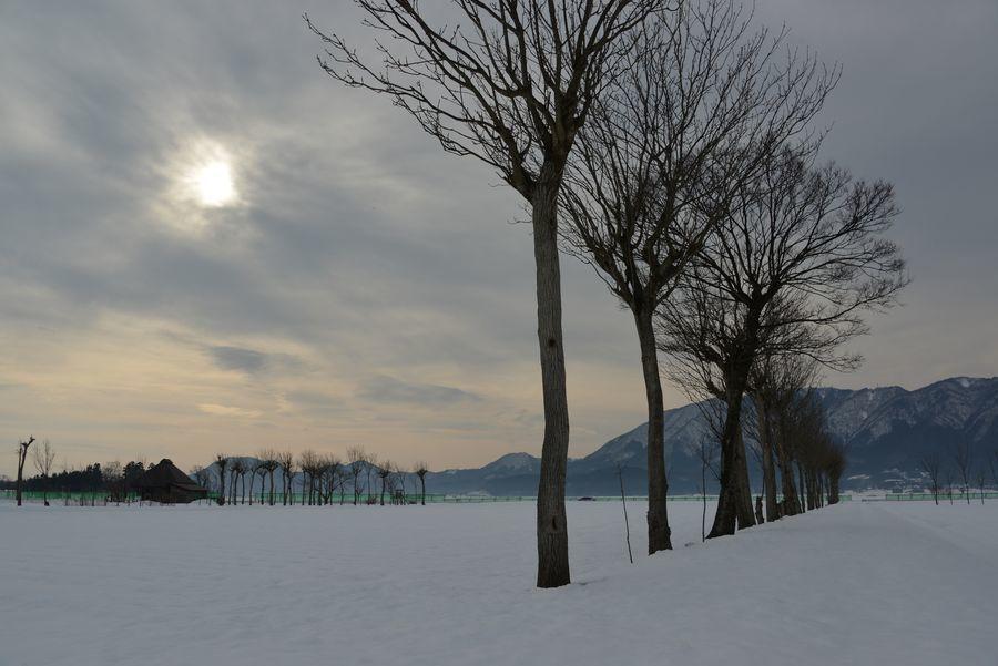 雪のはざ木-4