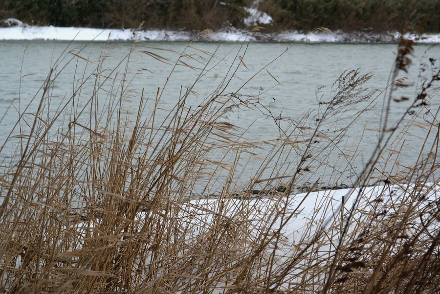 冬の川-10