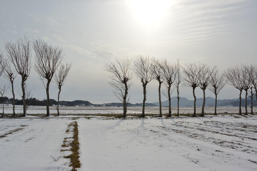 雪のはざ木-1