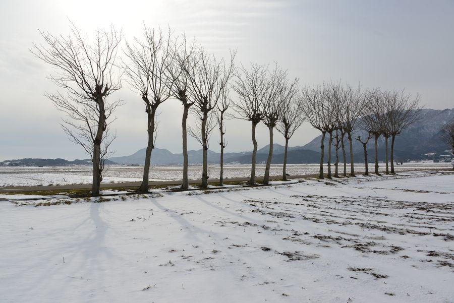 雪のはざ木-2