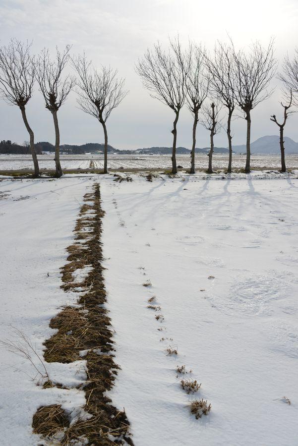 雪のはざ木-3