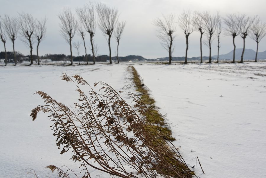 雪のはざ木-5