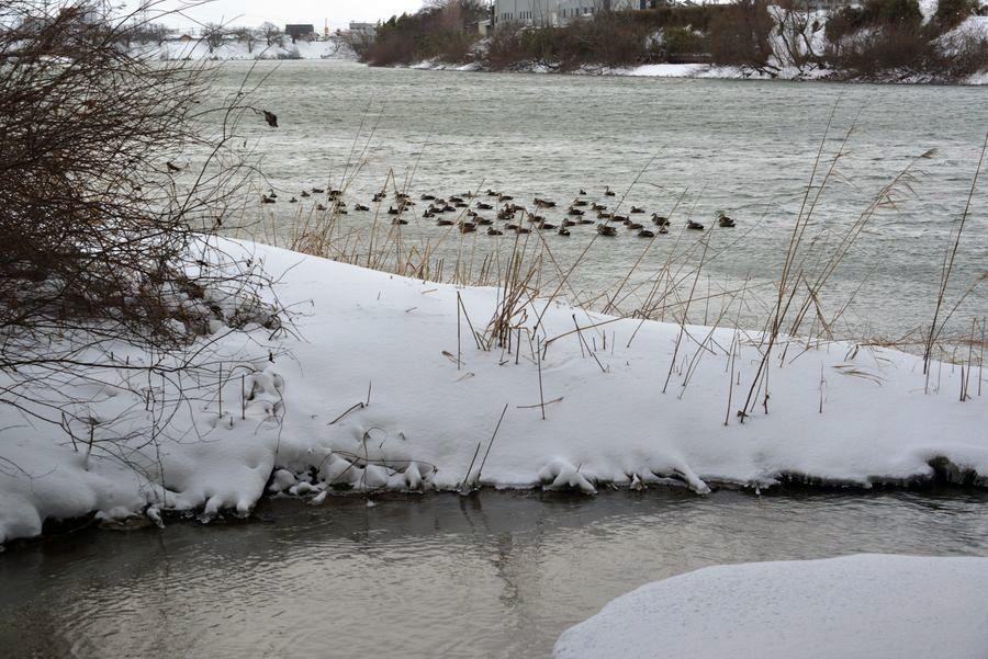冬の川-3