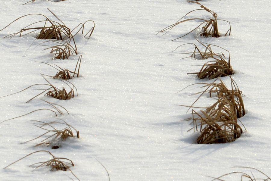 雪の田-2
