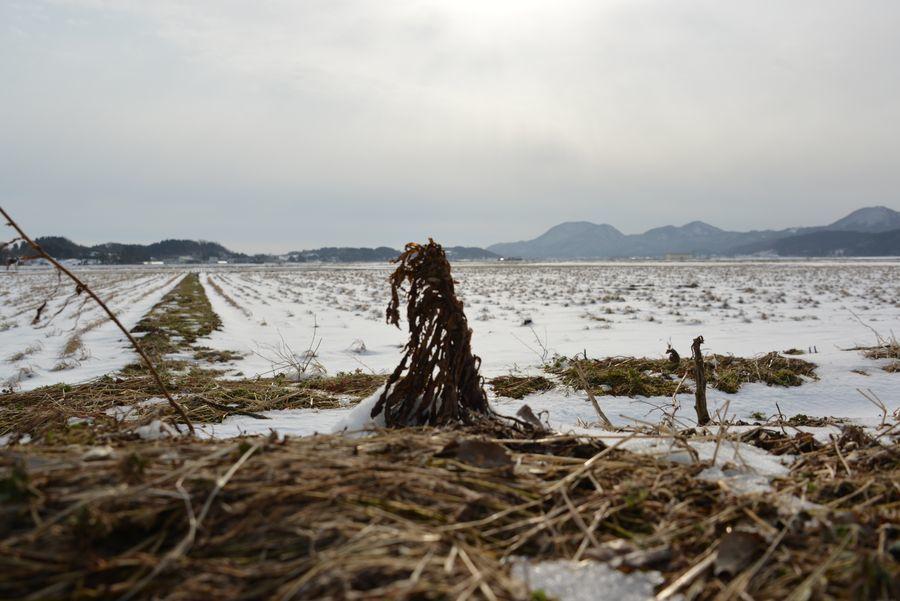雪の田-4