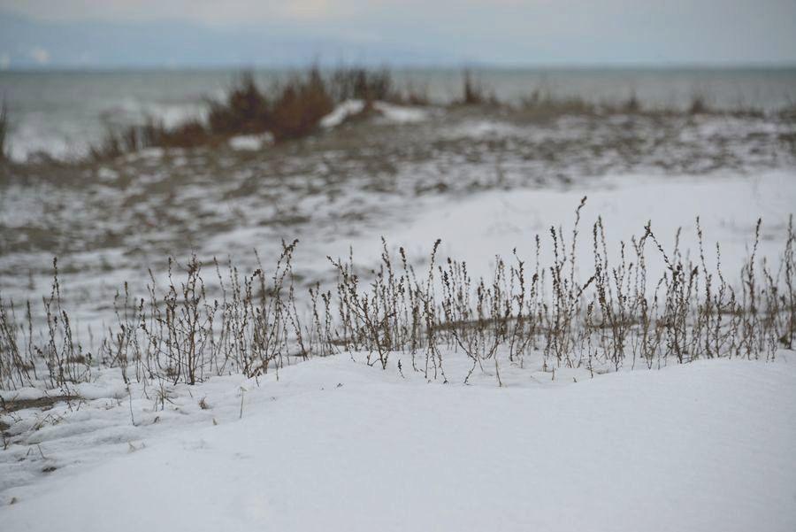雪の野積海岸-5