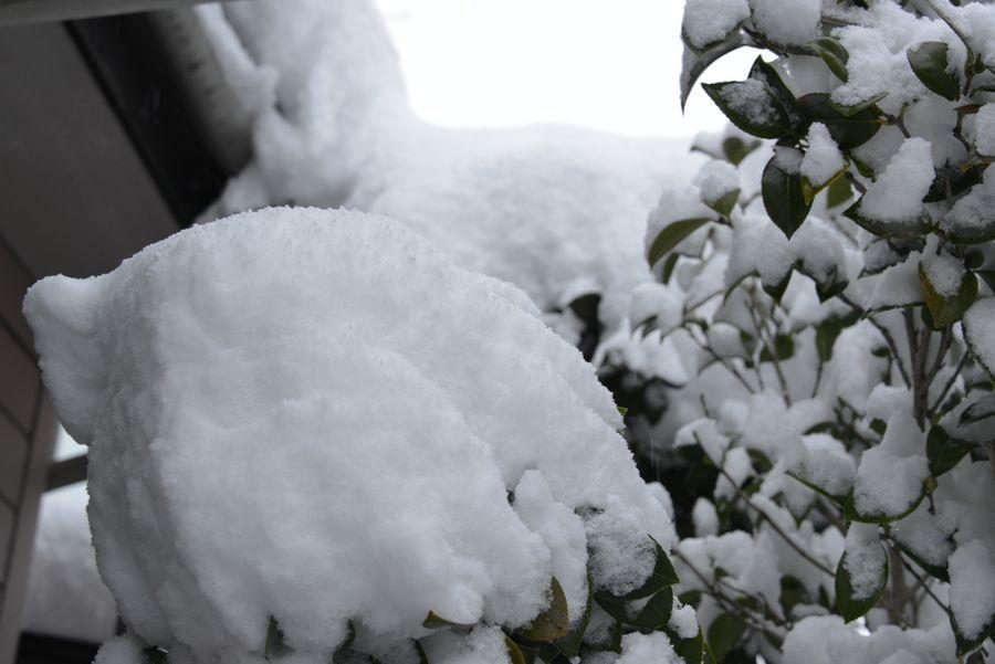 大雪だっ-6