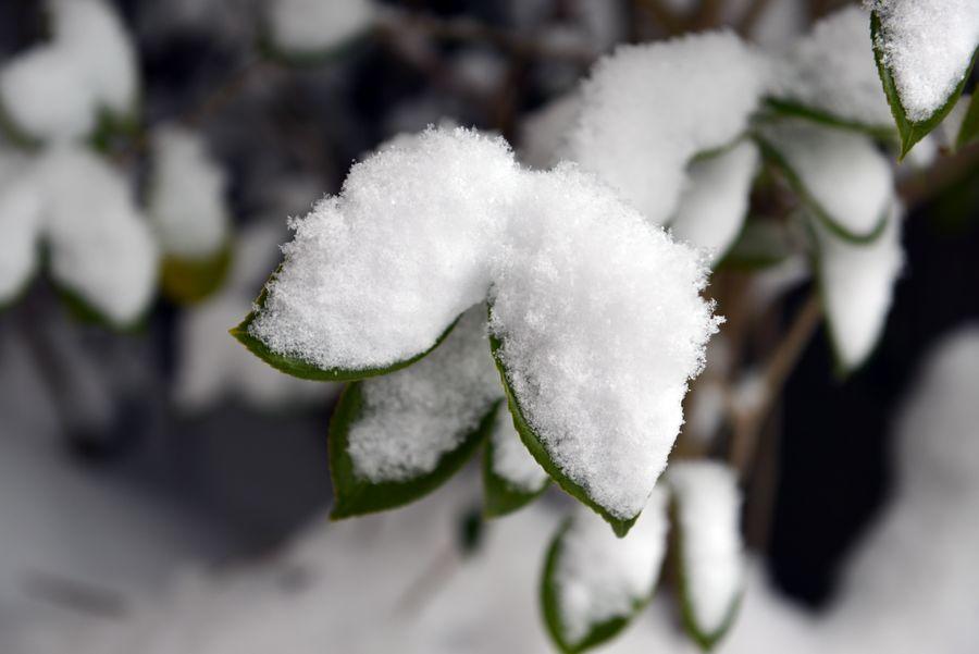 雪は積もる-1