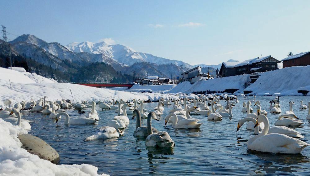 白鳥の郷 スマホ-4