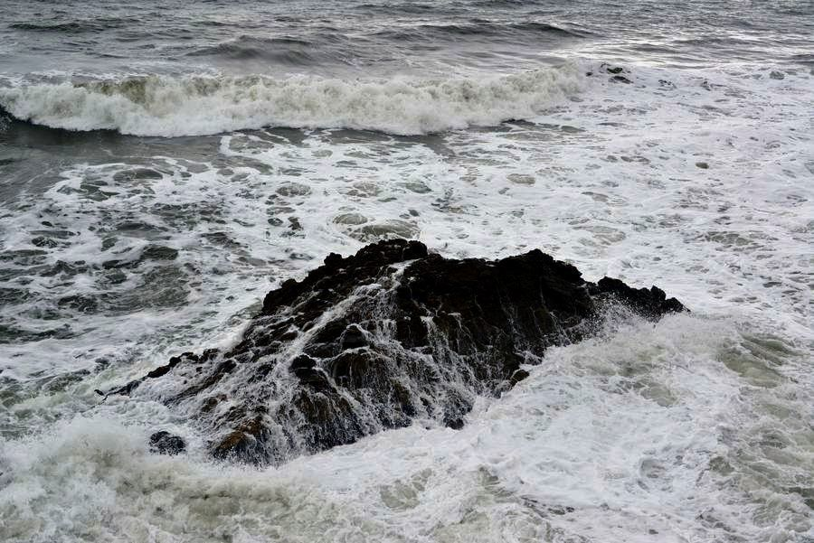 岩を覆う-4