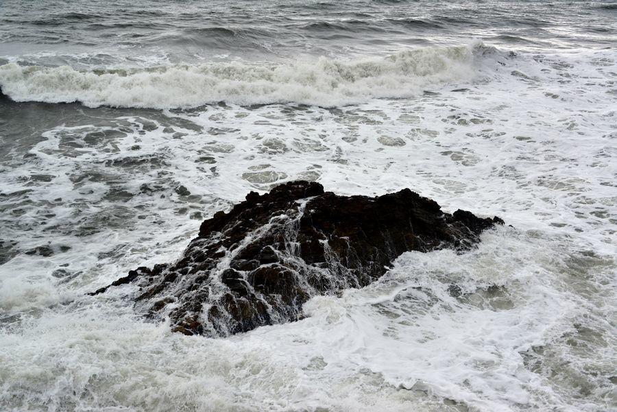 岩を覆う-5