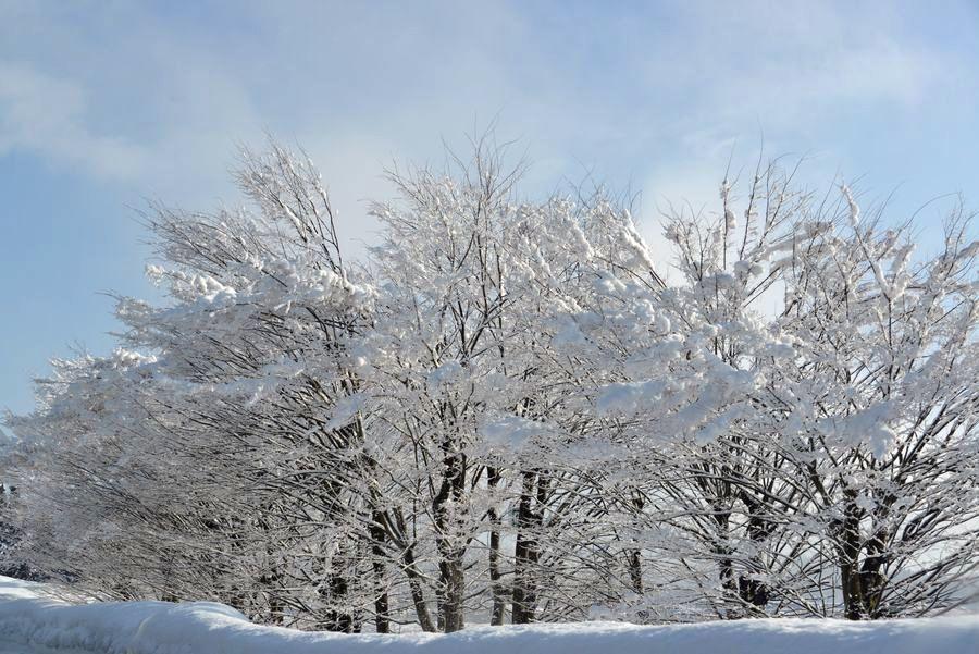 冬の関越を走る-5