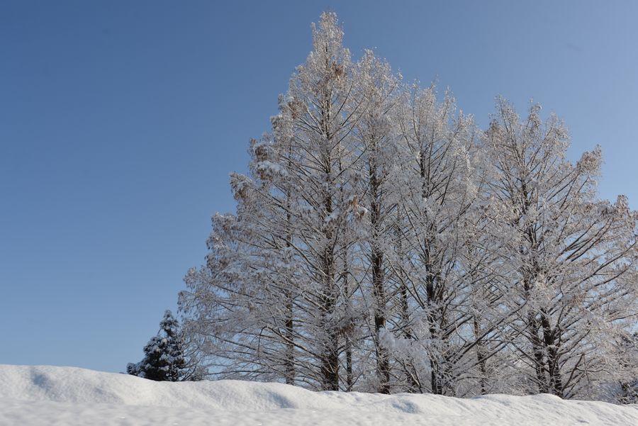冬の関越を走る-6
