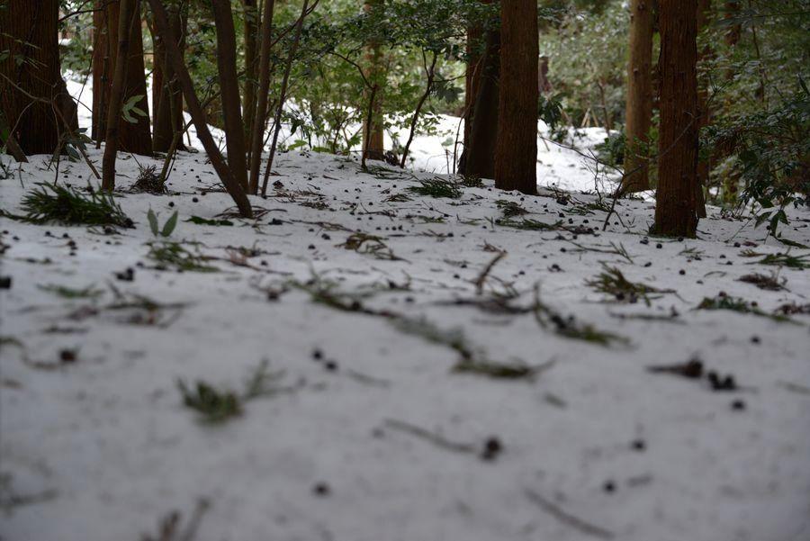 雪の神社-6