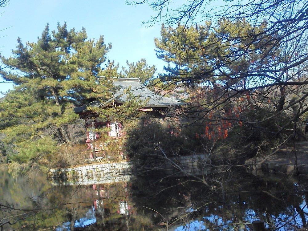 F1000184厳島神社とイイギリの実1月7日