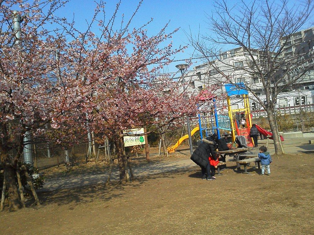 F1000127池袋本町電車の見える公園2月24日河津桜