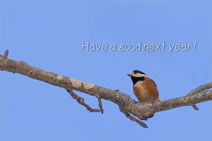 Have a good next year!