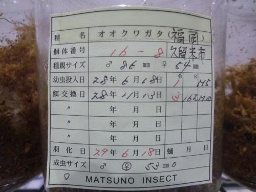 70 マツノ16-8 53mm