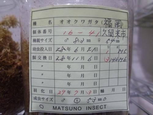 70 マツノ16-41 53mm