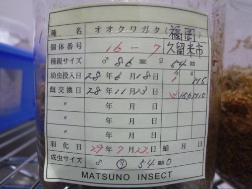 70 マツノ16-7 54mm