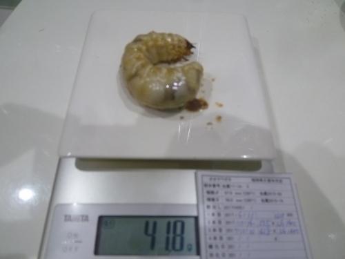 07 虫蔵17-14-3 418