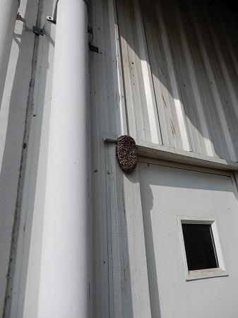 ハチの巣ー1