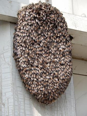 ハチの巣ー2