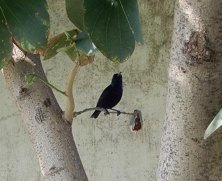 黒い鳥拡大