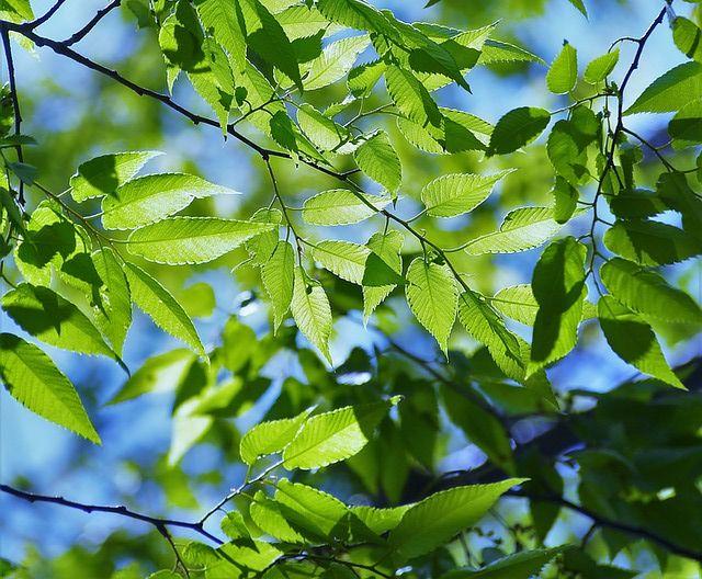 グリーン 緑 背景