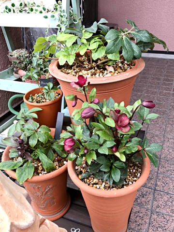 gardening369