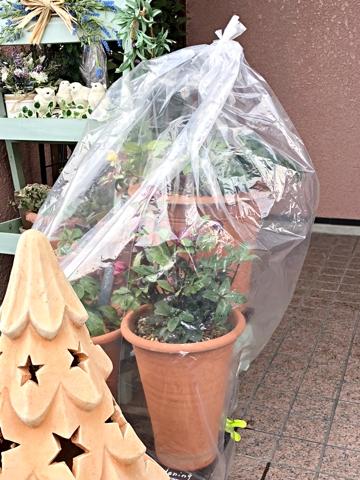 gardening370