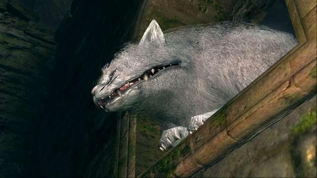 PC 版 DARK SOULS with ARTORIAS OF THE ABYSS EDITION(Prepare To Die Edition) DSfix スクリーンショット、エリア 黒い森の庭(Darkroot Garden) 白猫アルヴィナ