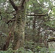 風伝峠法界塔